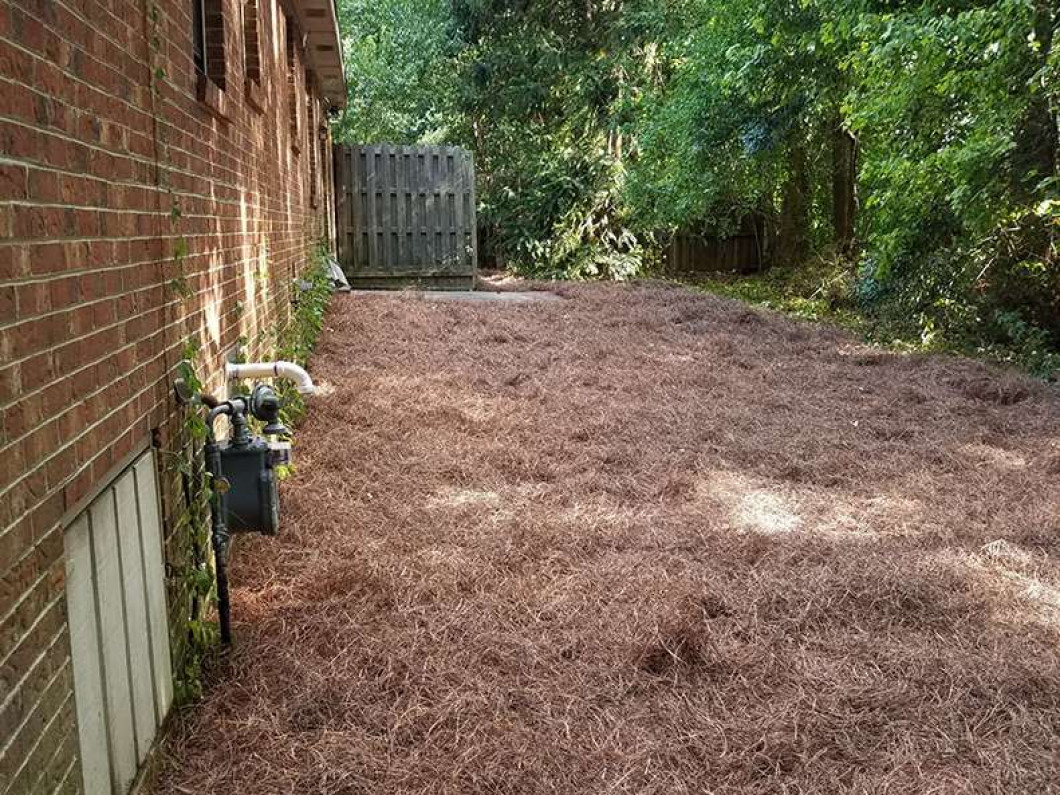 Discover the benefits of using pine straw