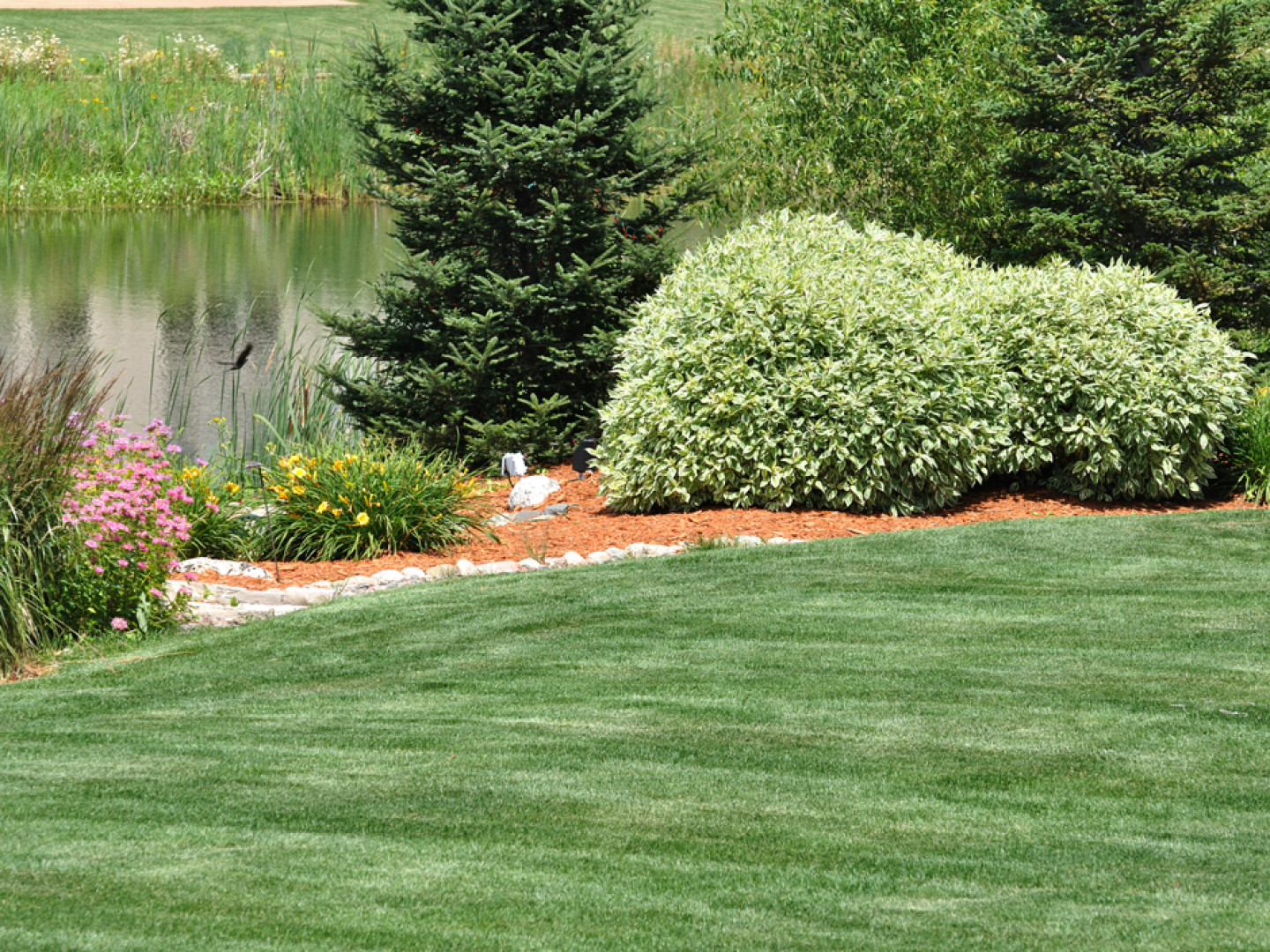 Landscape Pruning Hedge Trimming Raleigh Nc Raleigh Lawn Care